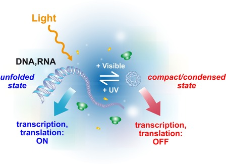 Photocontrol of gene expression based on light-induced nucleic acid conformational changes