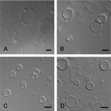 Formation of giant unilamellar vesicles from spin-coated lipid films by localized IR heating