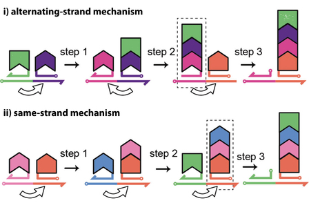 Programmable One-Pot Multistep Organic Synthesis Using DNA Junctions