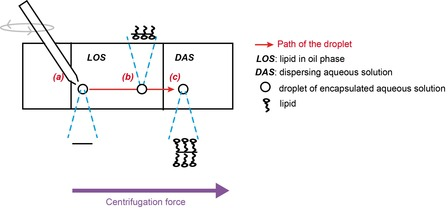 Steps in the vesicle formation: (a) Droplet production  (b) Saturation of the droplet surface by lipids in the lipid-in-oil solution (c) Vesicle formation after interface crossing from LOS to DAS
