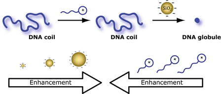 Just Published: More DNA compaction with negative charges!