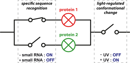 Just Accepted: Selective photocontrol of gene expression