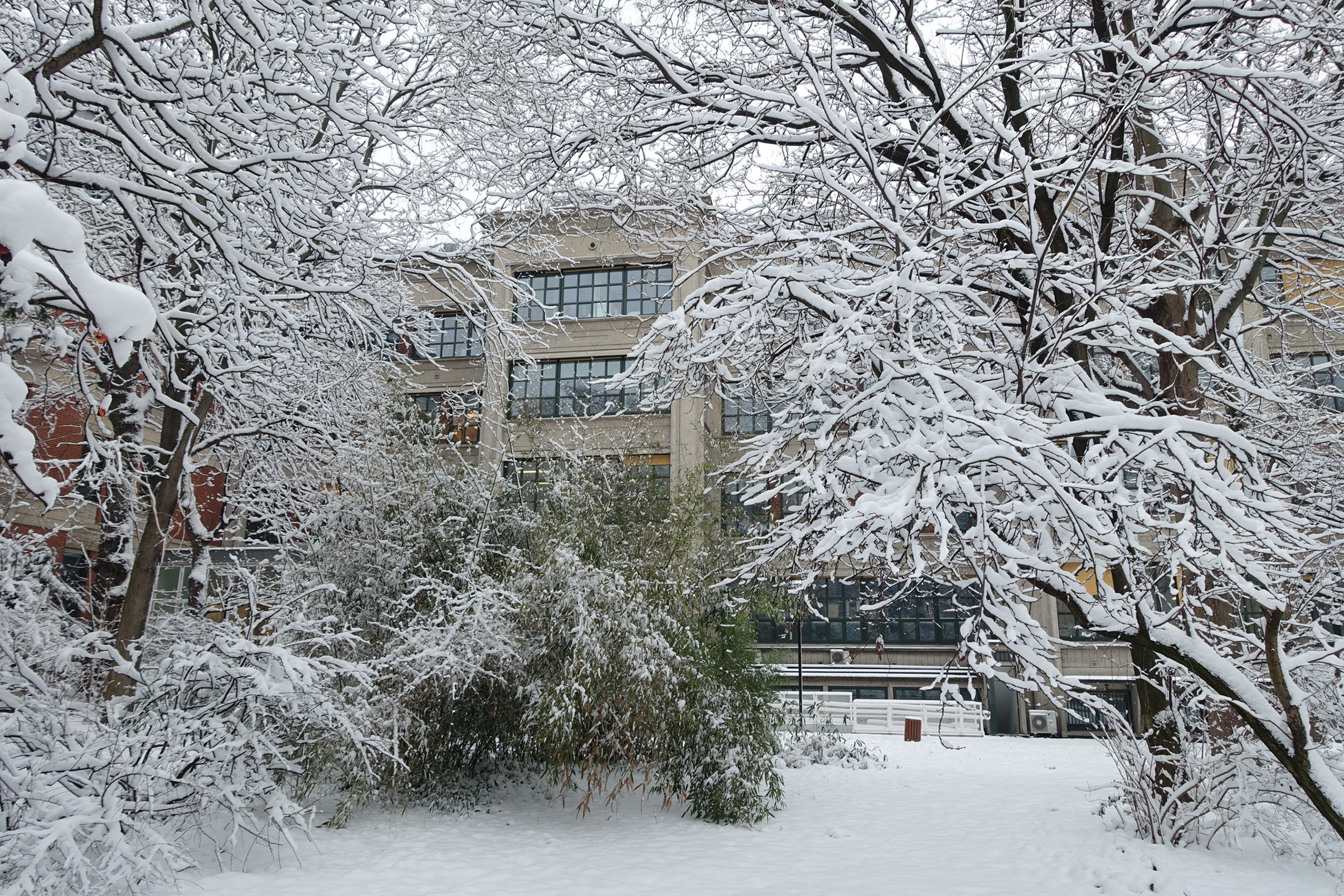 Snow on the lab and a seasonal background