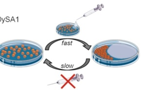 Nanoparticles in a Capillary Trap: Dynamic Self-Assembly at Fluid Interfaces