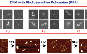 Photosensitive polyamines make DNA photocontrollable and ACS Nano!
