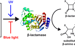 Just Accepted Paper: Photocontrol of enzyme synthesis and substrate conversion