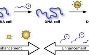 Just Accepted: More DNA compaction with negative charges!