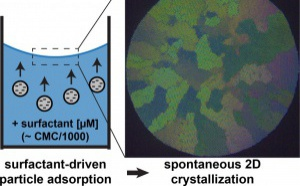 Our new paper 'Adsorption and Crystallization of Particles at the Air–Water Interface Induced by Minute Amounts of Surfactant' has just been accepted for publication in Langmuir!