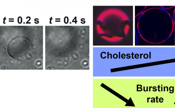 JACS-epted...UV-induced bursting of liposomes paper accepted in JACS!